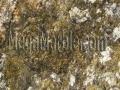 Fedy Carnival granite