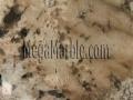 Ivory beauty granite